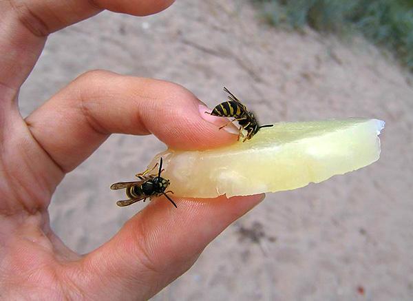 En règle générale, les guêpes, les abeilles et les frelons ne piquent que s'ils les provoquent.