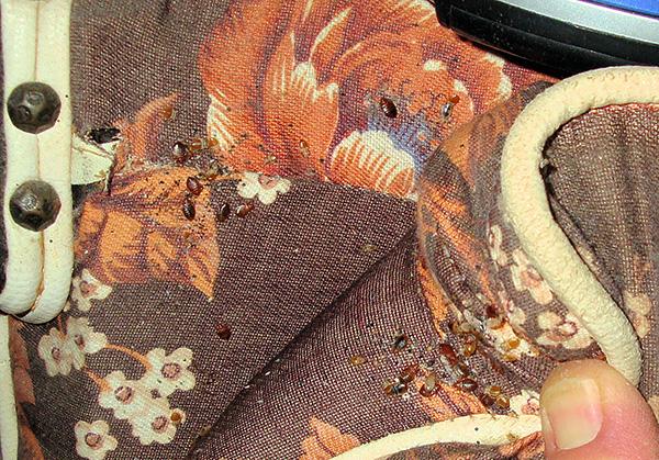 Des insectes dans les plis des meubles.