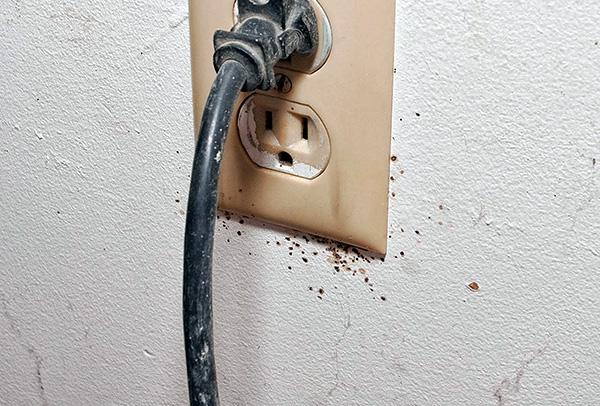 Les nids de punaises de lit peuvent être dans des prises électriques ...