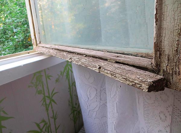 Les punaises de lit peuvent entrer dans l'appartement par le mur extérieur du bâtiment par les fentes des anciennes fenêtres.