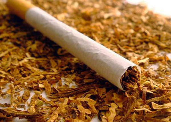 Le tabac (ou plutôt la nicotine qu'il contient) est un moyen extrêmement efficace de destruction des insectes.