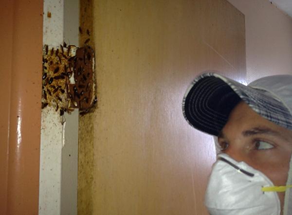 Le traitement au dichlorvos des sites de blattes donne un effet particulièrement élevé.