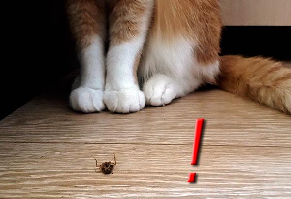 Les chiens et les chats ne devraient pas être autorisés à manger des blattes empoisonnées au dichlorvos.