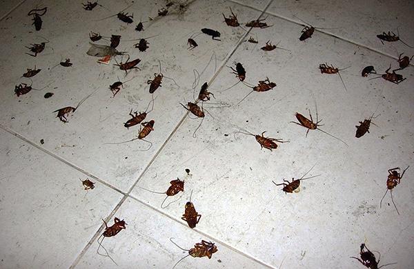 Les aérosols à base de pyréthroïdes synthétiques sont très efficaces et permettent de tuer les blattes dans un appartement en quelques heures seulement.