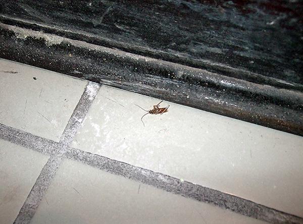 Plus l'agent insecticide n'est pas retiré longtemps des sites de traitement, plus il est probable que toutes les blattes le touchent.