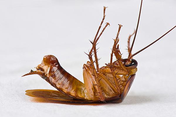 La plupart des insecticides modernes ont un effet neuroparalytique sur les insectes.