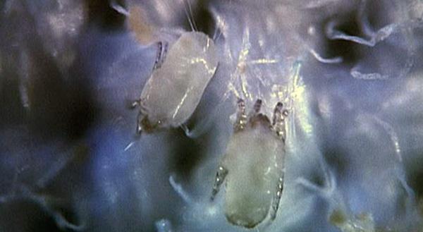 Donc, ces créatures regardent dans un microscope optique.