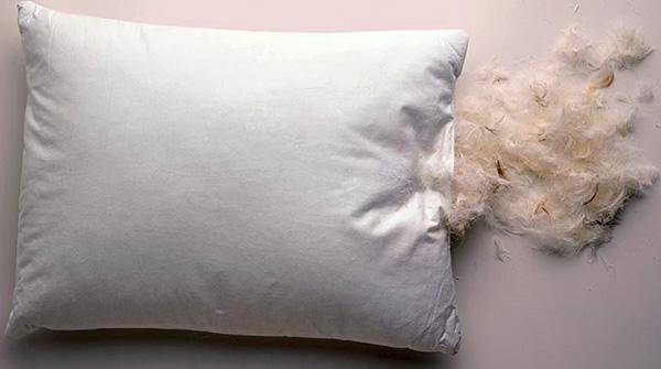 Les acariens des plumes, les oiseaux agaçants, ne vivent pas dans des oreillers duveteux.