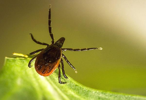Avec la bonne approche, il est possible de se protéger efficacement contre les piqûres de tiques lors de sorties en nature.