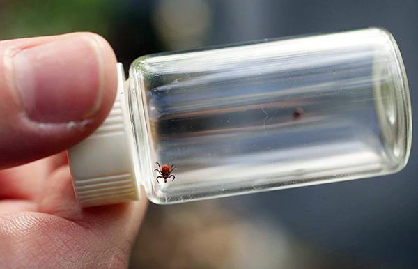 L'analyse des tiques révélera la présence du virus de l'encéphalite à tiques, ainsi que des agents responsables de la maladie de Lyme.